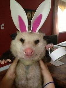Easter - it's Not Just for Bunnies Anymore - Shel Harrington