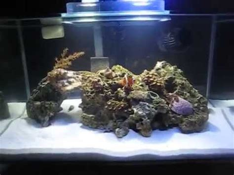pico reef led lighting fluval edge pico reef led coralife mod youtube