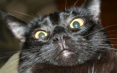 Cute Black Cat Fail Video Funny