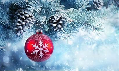 Christmas Tree Trees 4k Snow Winter Wallpapers