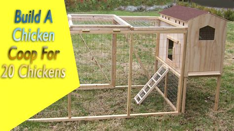 build  chicken coop   chickens build