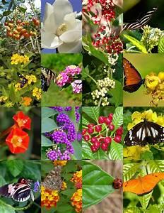 Butterfly Garden Mix Attract Butterflies Wild Flower
