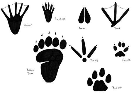 inspect animal tracks p letra 776   fea2a60690fb563a73031df05cee3ea4