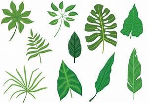 -Tropical-Leaves-Vectors - Download Free Vector Art, Stock ...