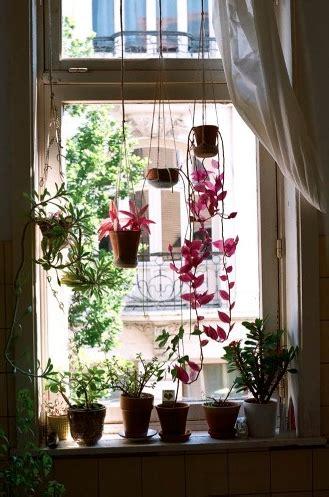 Plants On Windows by Windowsill Current Garden Hanging Plants Plants