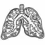 Lungs Clipart Anatomy Drawing Lung Human Heart Clip Outline Simple Coloring Pages Cliparts Medical Worksheet Printable Deflated 1000 Clipground Library sketch template