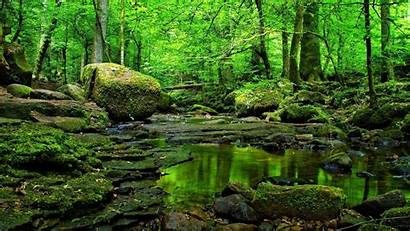 Forest Pc Water Desktop Wallpapers Grass Rocks