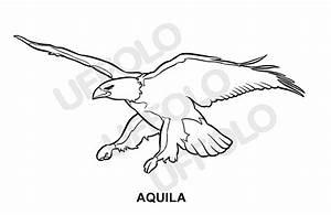 disegni immagini da stampare e colorare Uccelli e