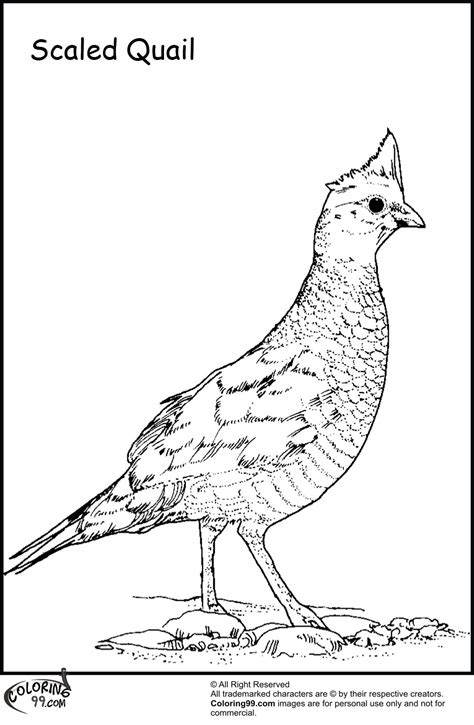 Coloring Quail by Quail Coloring Pages Minister Coloring