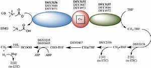 Fig  S1  Growth Of D  Hafniense Y51 In The Presence Of