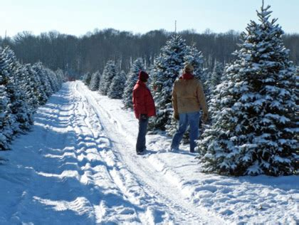 best place to cut your own christmas tree in va best places to cut your own tree in the dc area 171 cbs dc
