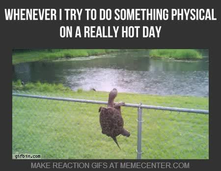 Hot Weather Memes - cold weather weather and weird on pinterest