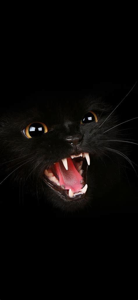 mj black cat roar animal cute papersco