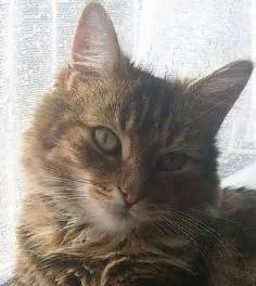 free cats for adoption free for adoption 3 cats hull east of