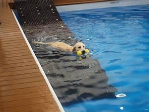 Hunde Pool Bauen : die besten 17 ideen zu hunde schwimmingpools auf pinterest hunde teich und hunde pool ~ Frokenaadalensverden.com Haus und Dekorationen