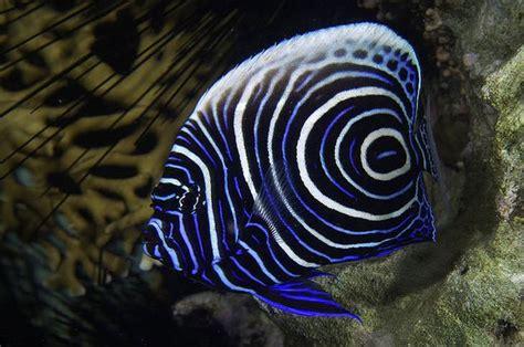 worlds  colorful  beautiful fish