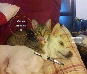 Funny Cat Dog Picture with Hindi Comment | Cats, Comment ...