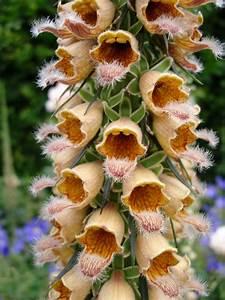 Pflanzen Zur Luftbefeuchtung : pflanzen unter naturschutz diese pflanzen sind bedroht sie stehen unter naturschutz die ~ Sanjose-hotels-ca.com Haus und Dekorationen