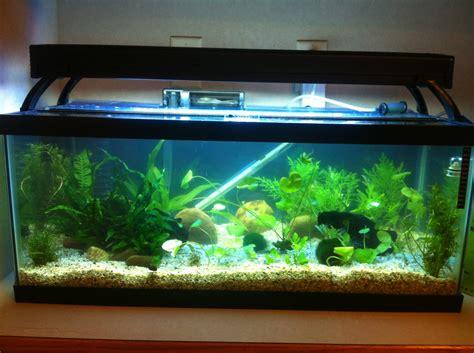 aquarium advice aquarium forum community razorback01 s