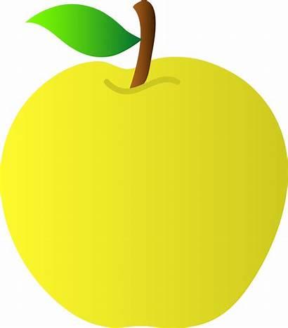 Apple Yellow Clipart Golden Delicious Vector Clip