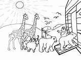 Noah Ark Coloring Pages Noahs Printable Drawing Flood Animals Sheets Bible Rainbow Sunday Children Covenant Cartoon Glass Awesome Getcolorings Pluspng sketch template