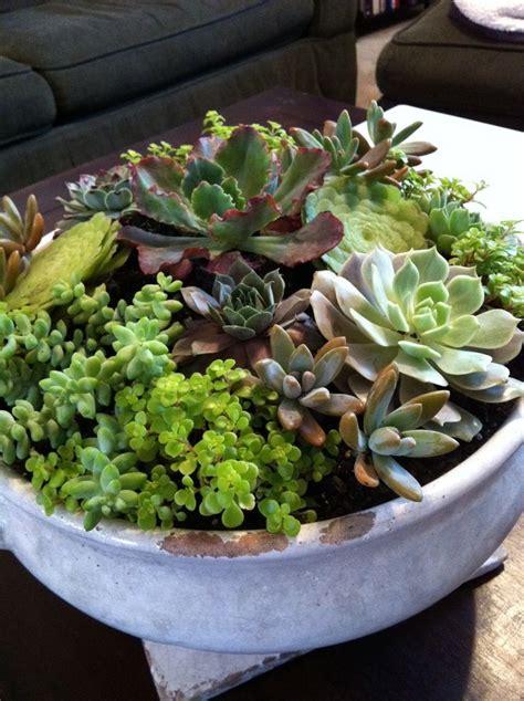 indoor succulent garden 1000 ideas about indoor succulent garden on