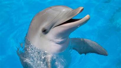 Animals Prosthetics Amazing Floss Mental