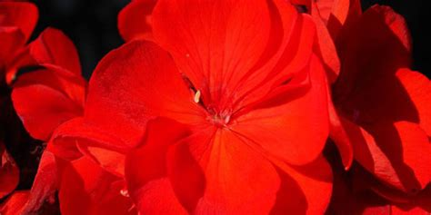 Aborsi Alami Bogor Hiasi Rumah Dengan Tanaman Cantik Aromatik Ini Merdeka Com
