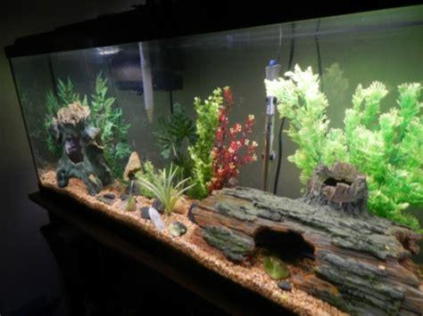plante pour chambre à coucher l 39 aquarium meuble dans la déco