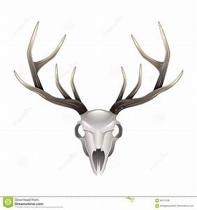 Deer Skull Front View Isolated Vector Stock Vector - Image ...