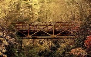 Old, Bridge, In, Jungle