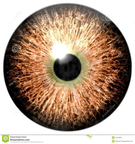 Bird Eye. Animal Eye With Purple Colored Iris, Detail View