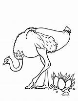 Ostrich Coloring Pages Printable Eggs Coloringcafe Sheet Animal Ostriches Drawing Egg Outline Pdf Animals Wood Draw Birds Adult Sheets Getcoloringpages sketch template