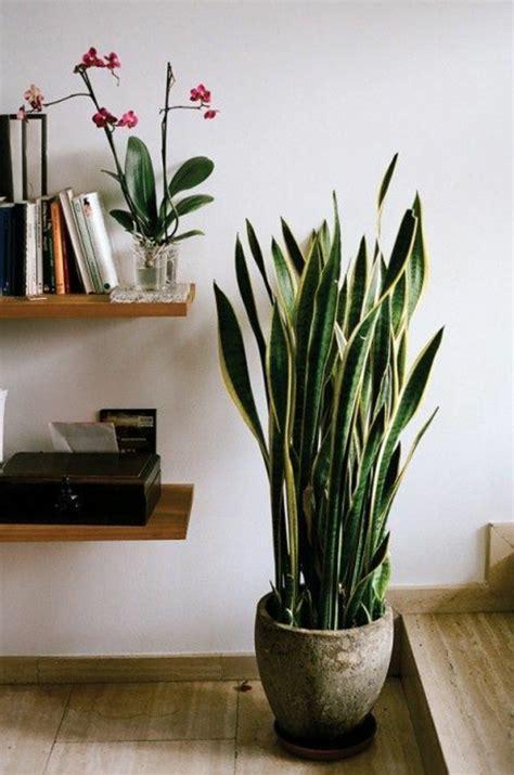 comment décorer la chambre de bébé savourez la beauté de la plante d intérieur dans notre