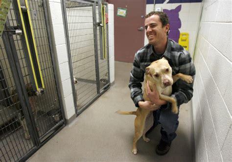salt lake county animal shelter achieves  kill status