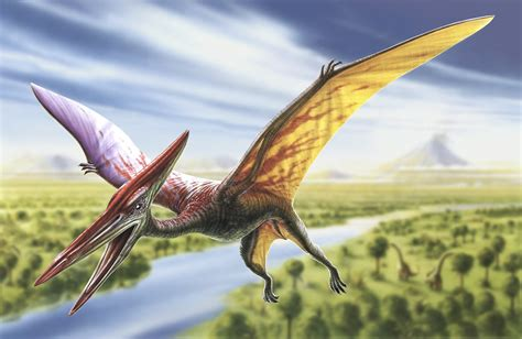 pterodactyl high quality wall murals   uk
