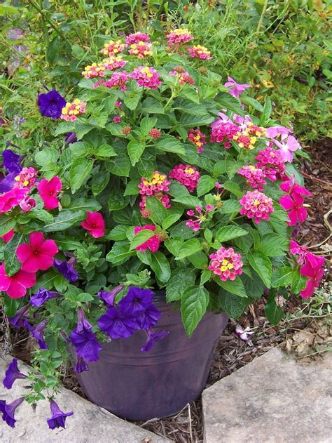 great container plant combinations back to basics