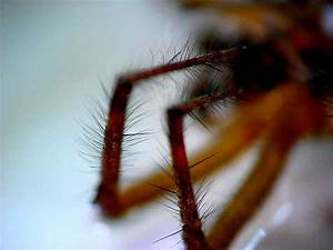U0026 39 Hairy U0026 39  Insects And Spiders  Spurs  Spines  Setae  And