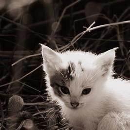 Comment Savoir Si Une Voiture Est Volée : comment savoir si mon chaton est un m le ou une femelle ~ Medecine-chirurgie-esthetiques.com Avis de Voitures