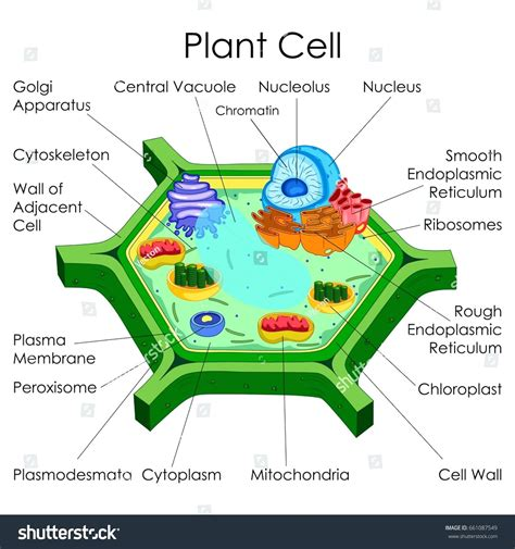 Diagram Plant Cell Diagram With Labels