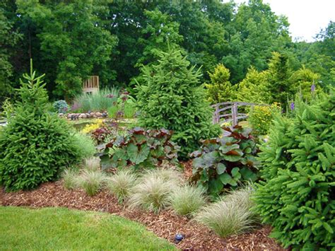 shrubs for borders border shrubs for landscaping pictures to pin on pinterest pinsdaddy