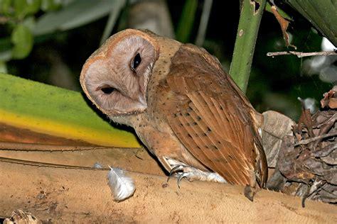 Madagascar Birding Tour