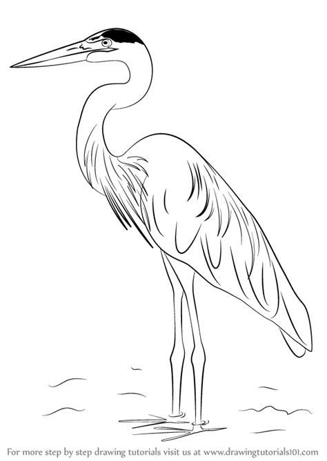 learn   draw  great blue heron birds step  step