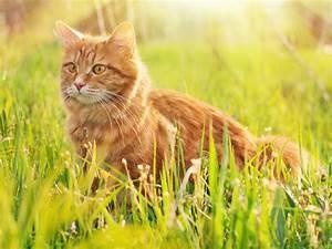 Balkonschutz Für Katzen : gute warrior cats namen f r diese katzen rpg ~ Eleganceandgraceweddings.com Haus und Dekorationen