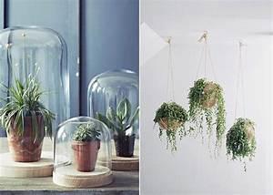Plante Balcon Facile D Entretien : la succulente la plante grasse astuces d co et conseil ~ Melissatoandfro.com Idées de Décoration