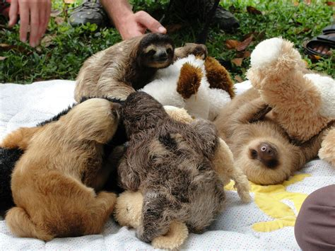 Funny Sloth Wallpapers 73 Images