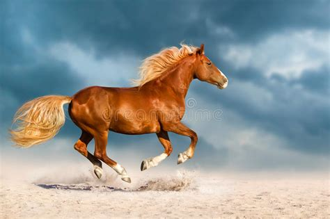 Red horse run in desert stock photo. Image of white ...