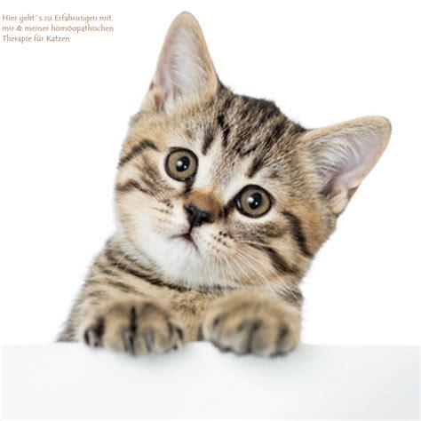 Niereninsuffizienz Katze Homöopathie