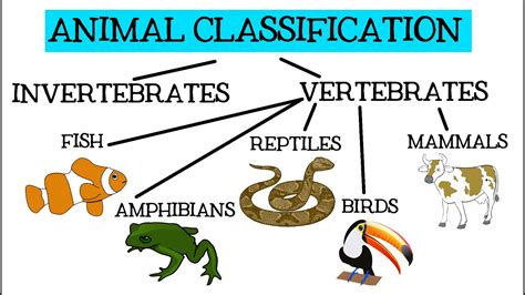 Animal Classification for Children: Classifying