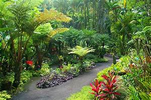 Scenic drive to a botanical garden on big island hawaiicom for Hilo botanical gardens